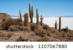 trichoreceus cactus on isla... | Shutterstock . vector #1107067880