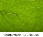 full frame macro detail of a green translucent leaf - stock photo