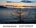 sunset over the solitaire tree... | Shutterstock . vector #1107159029