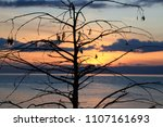 sunset over the solitaire tree... | Shutterstock . vector #1107161693