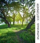 beautiful green grassy area... | Shutterstock . vector #1107290459