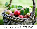 Fresh And Colorful Apples In...