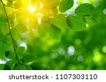 sun beams and green leaves.... | Shutterstock . vector #1107303110