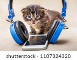 Small photo of Little striped cute kitty near headphones. Baby listens to music. Classical music for kids