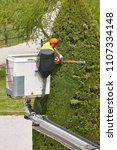 equiped worker pruning a tree... | Shutterstock . vector #1107334148