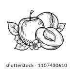 apricot half fruit vector... | Shutterstock .eps vector #1107430610