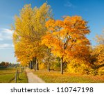 Colorful Trees In The Autumn...
