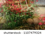 flower composition. rose... | Shutterstock . vector #1107479324