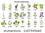 best medicinal herbs for... | Shutterstock .eps vector #1107545660