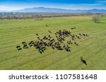 buffalo grazing next to the... | Shutterstock . vector #1107581648
