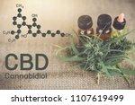 Cannabis Oil  Cbd Oil Cannabis...