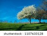 Small photo of tree blossom spring