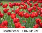 tulips flowers red  | Shutterstock . vector #1107634229