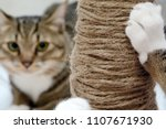 Stock photo cat scratching claws on the scratching post 1107671930