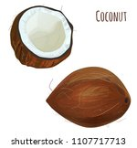set of two brown coconuts ...