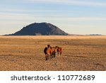 wild horses of the namib near... | Shutterstock . vector #110772689