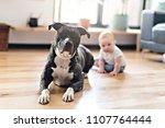 baby girl sitting with pitbull... | Shutterstock . vector #1107764444