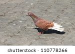 pigeon on pavement | Shutterstock . vector #110778266