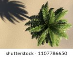 palm top view 3d  | Shutterstock . vector #1107786650
