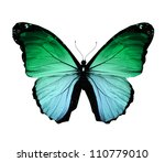 Stock photo morpho green butterfly isolated on white 110779010