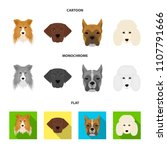 muzzle of different breeds of... | Shutterstock . vector #1107791666