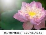 the beautiful buddha. | Shutterstock . vector #1107814166