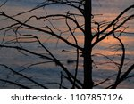 sunset over the solitaire tree... | Shutterstock . vector #1107857126