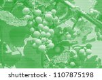 image collage of ripening... | Shutterstock .eps vector #1107875198