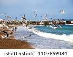 Seascape With Seagulls Flying...