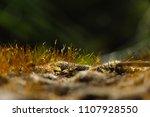 macro ground in the garden with ... | Shutterstock . vector #1107928550