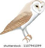Stock vector vector barn owl tyto alba 1107941099