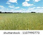 wheat field. sunny summer day.   | Shutterstock . vector #1107990773