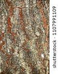 bark tree texture | Shutterstock . vector #1107991109