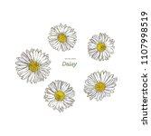 daisy  common daisy . hand draw ... | Shutterstock .eps vector #1107998519