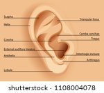 diagram of the ear illustration | Shutterstock .eps vector #1108004078