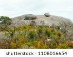 stony hill   albany   australia | Shutterstock . vector #1108016654