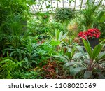 interior of a conservatory with ...   Shutterstock . vector #1108020569