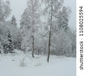 Small photo of Winter winter winter