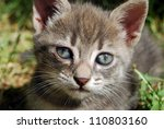 Stock photo the grey cat 110803160
