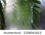 leaves green plant rain glass... | Shutterstock . vector #1108061813