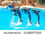dolphin jumping above blue water | Shutterstock . vector #1108097030