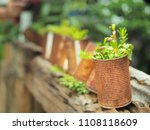 the young plant tree  ... | Shutterstock . vector #1108118609