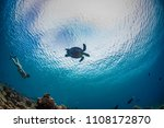 snorkeling girl watching turtle ... | Shutterstock . vector #1108172870