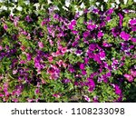 big flowerbed with many tulips... | Shutterstock . vector #1108233098