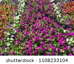 big flowerbed with many tulips... | Shutterstock . vector #1108233104