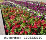 big flowerbed with many tulips... | Shutterstock . vector #1108233110