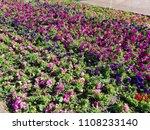 landscape view of a beautiful... | Shutterstock . vector #1108233140