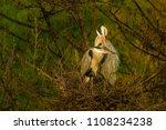 grey heron  ardea cinerea ... | Shutterstock . vector #1108234238