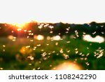 Beautiful Light Seeds Of A...