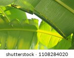 banana leaf green tropical... | Shutterstock . vector #1108284020
